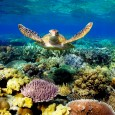 Is the Great Barrier Reef a victim of ecocide? Everyone is invited to join us for a special hearing of Australia's first Rights of Nature Ethics Tribunal. Expert witnesses will […]