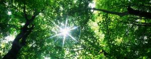 exploring ecospirituality