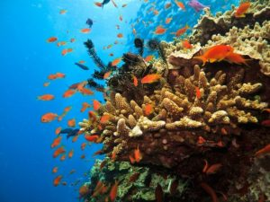 Recognizing Rights of Great Barrier Reef Could Help Defeat Destructive Coal Mine Project