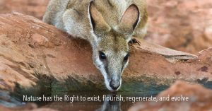 Media Release: First Rights of Nature bill introduced in Australia
