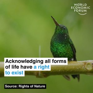 Video: Here are 4 countries that give the natural world the same rights as humans